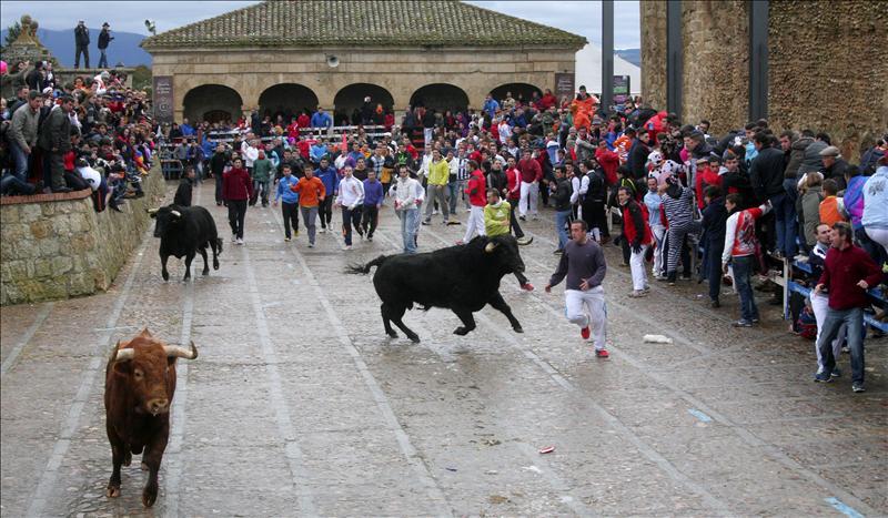 Bulls Carnaval