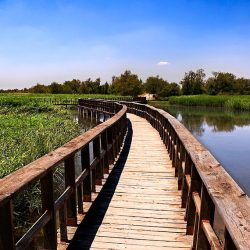 Tablas de Daimiel – National Park