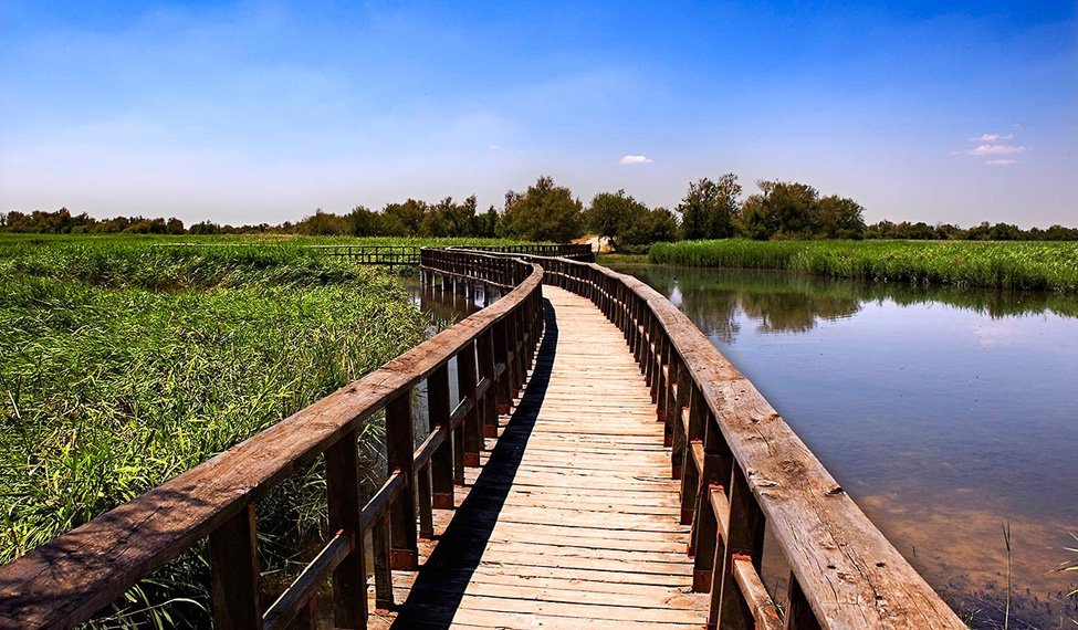 Tablas de Daimiel National Park at Spring